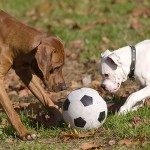 2 dogs and ball 150x150 - Activities