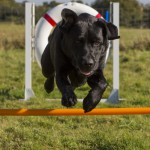 sam agility 001 150x150 - Activities