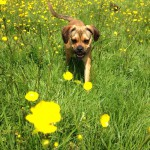 walking through buttercups 150x150 - Activities