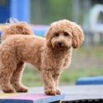 dog days adventure 1 150x150 - Doggy day care for dog socialisation in Addlestone, Surrey