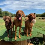 dog days adventure 10 150x150 - Doggy day care for dog socialisation in Addlestone, Surrey