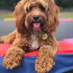 dog days adventure 14 150x150 - Doggy day care for dog socialisation in Addlestone, Surrey