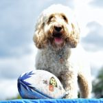 dog days adventure 18 150x150 - Doggy day care for dog socialisation in Addlestone, Surrey