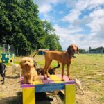 dog days adventure 3 150x150 - Doggy day care for dog socialisation in Addlestone, Surrey