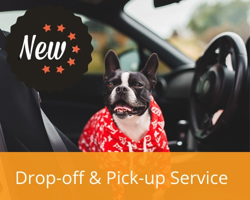 Local dog pick-up and drop-off service